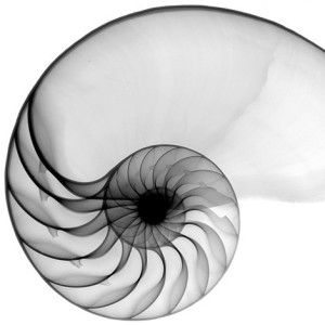 cropped-nautilus-coupe.jpg